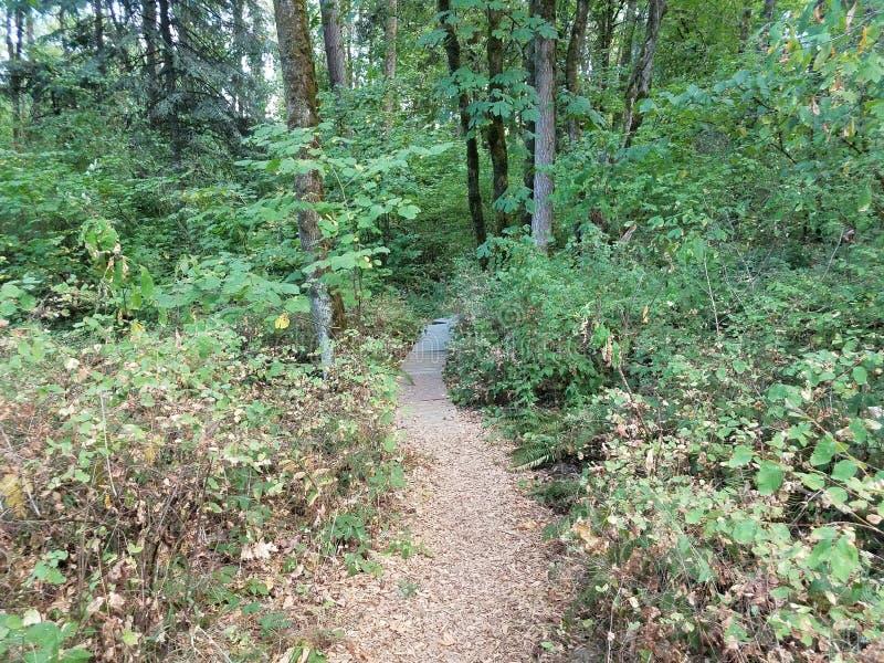 道路或足迹在有绿色叶子和树和植物和木板的森林 库存图片