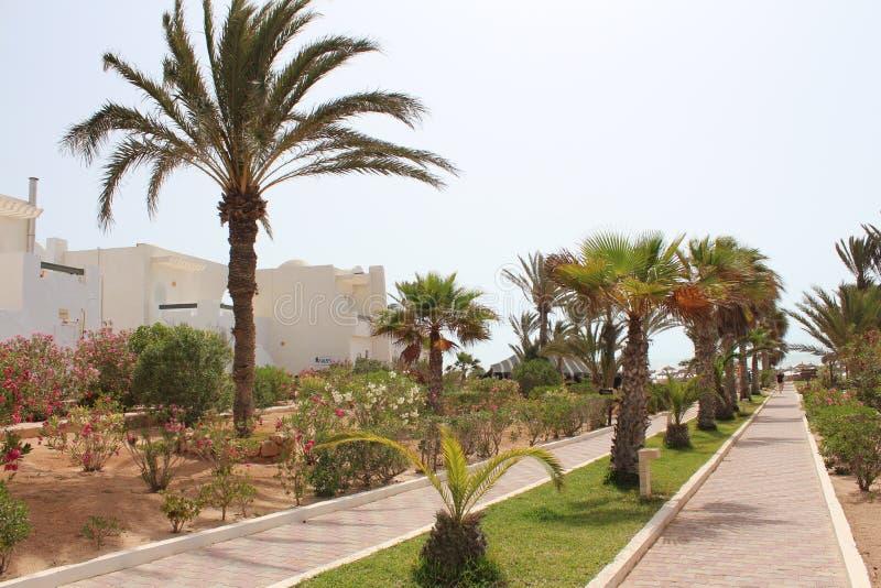 道路标示用棕榈树对海岸 库存照片