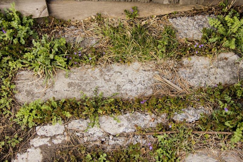 道路由平板制成 草和野花发芽在板材之间 免版税库存图片