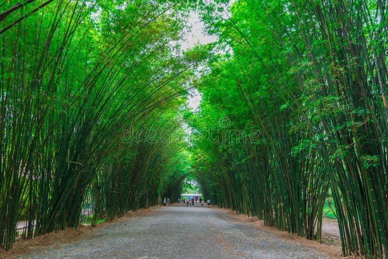 图片 包括有 通过, 森林, 环境, 工厂, 增长, 公园, 平安, 玻色子