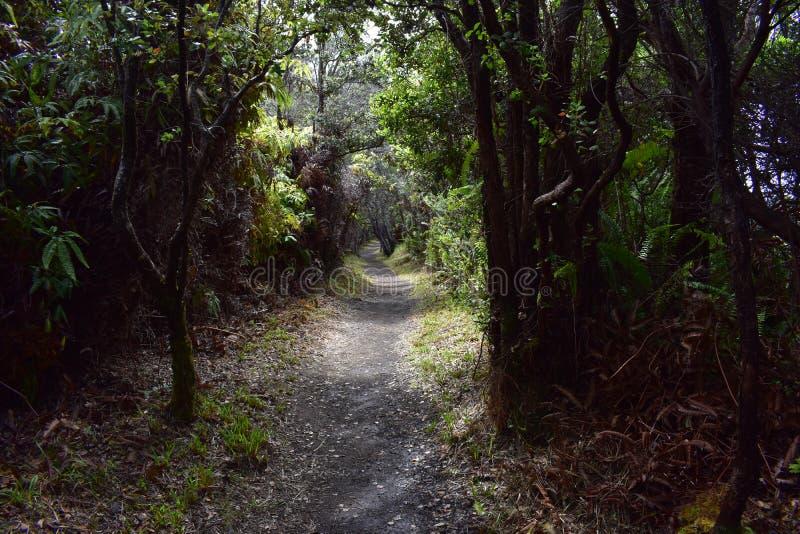 道路穿过一片豪华的热带雨林 图库摄影