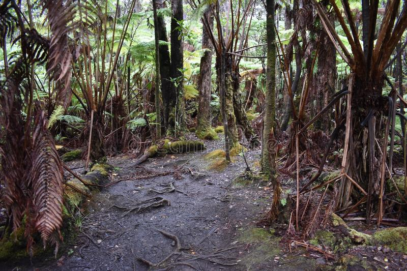 道路穿过一片豪华的热带雨林 免版税库存照片
