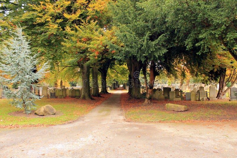 道路穿过公墓在树机盖下  免版税图库摄影