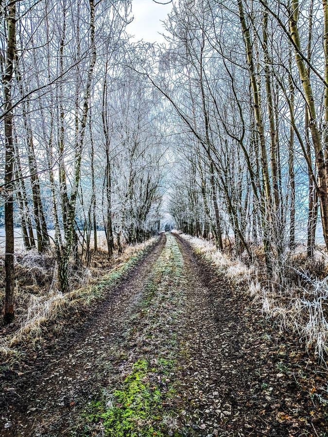 道路穿过在积雪的树之间的胡同,冬天乡下风景 免版税库存照片