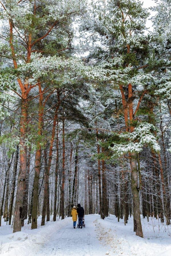 道路穿过杉树在冬天公园 免版税库存图片