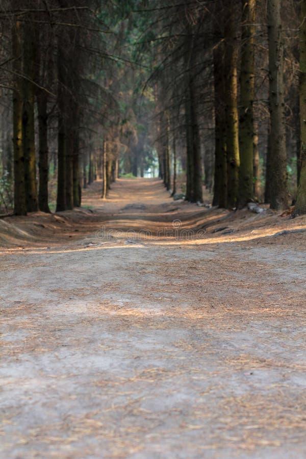 道路穿过森林在一Suny天 乌克兰 库存照片