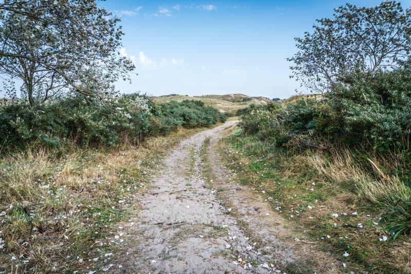 道路穿过沙丘洒与silve白杨树离开 库存图片