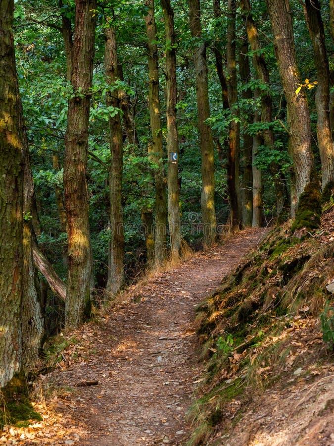 道路穿过沿Rheinsteig足迹的森林在德国 库存图片