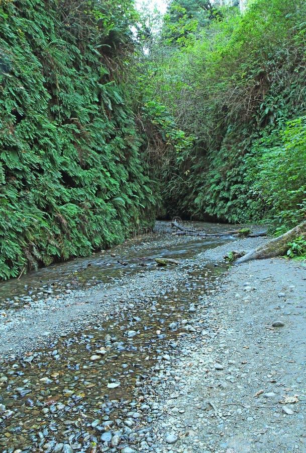 道路穿过蕨峡谷,大草原Creek红木国家公园, Cal 免版税库存照片