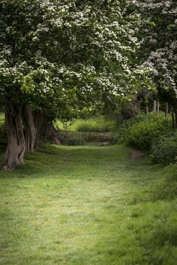道路穿过豪华的浅景深森林风景用英语 免版税库存图片