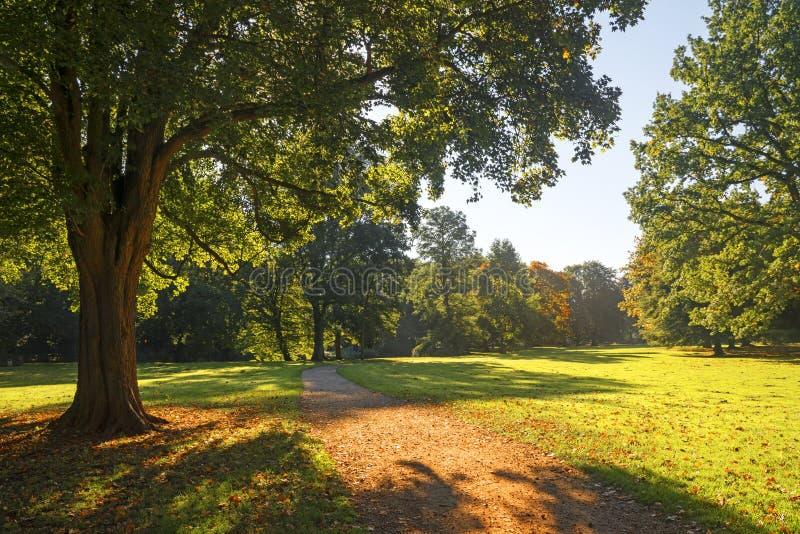 道路穿过金黄光的秋季公园 免版税库存照片