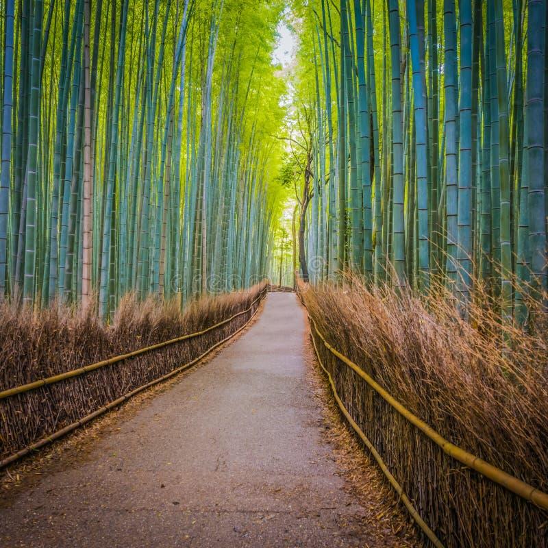 道路穿过Arashyama竹子树丛 免版税库存图片