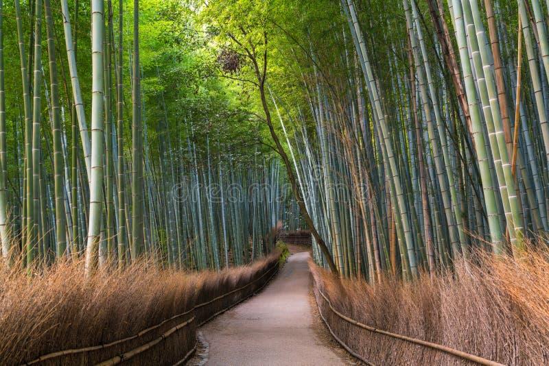 道路穿过Sagano的,Arashiyama,京都竹森林, 图库摄影