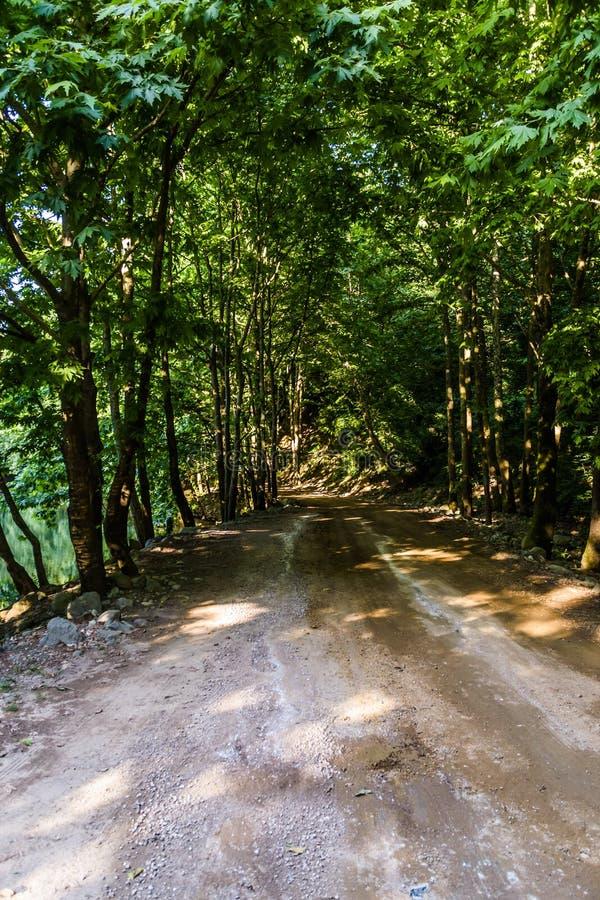 道路穿过Tesvikiye村庄-土耳其森林  免版税库存照片