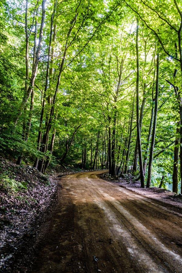道路穿过Tesvikiye村庄-土耳其森林  库存照片