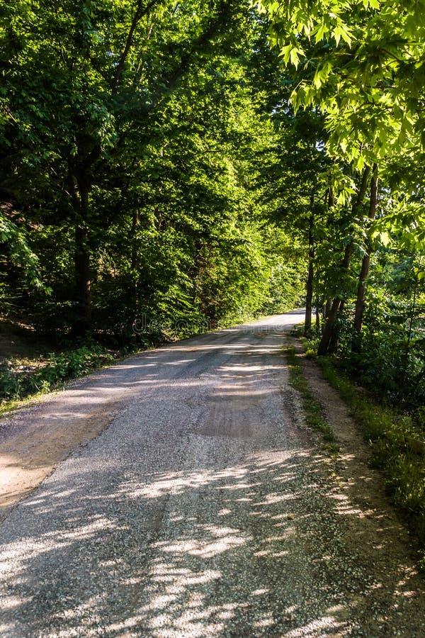 道路穿过Tesvikiye村庄-土耳其森林  库存图片