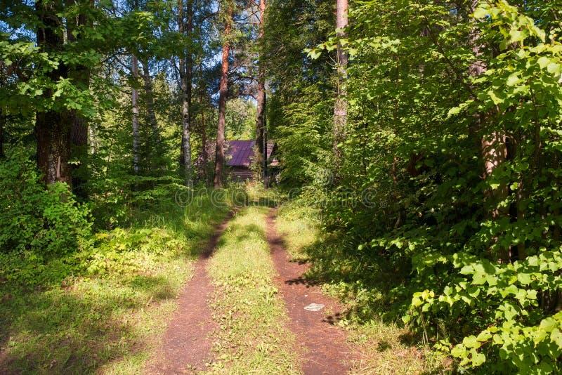 道路 — 穿过森林 库存图片