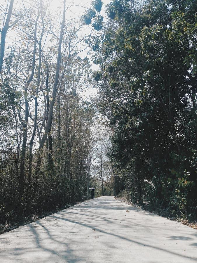 道路 图库摄影