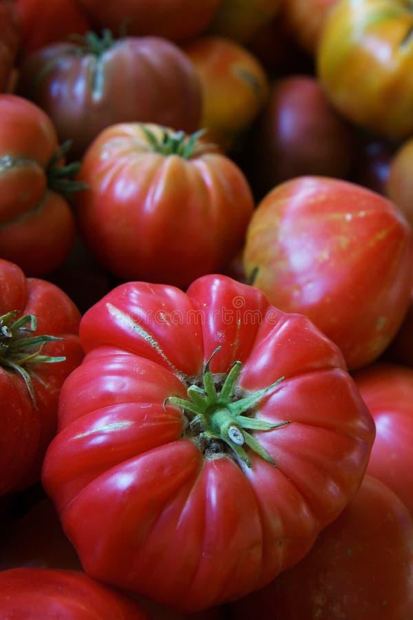 遗产蕃茄 免版税库存照片