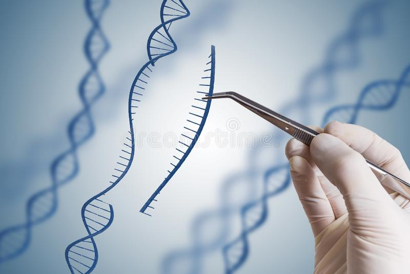遗传工程, GMO和基因操作概念 手插入脱氧核糖核酸序列  免版税库存图片