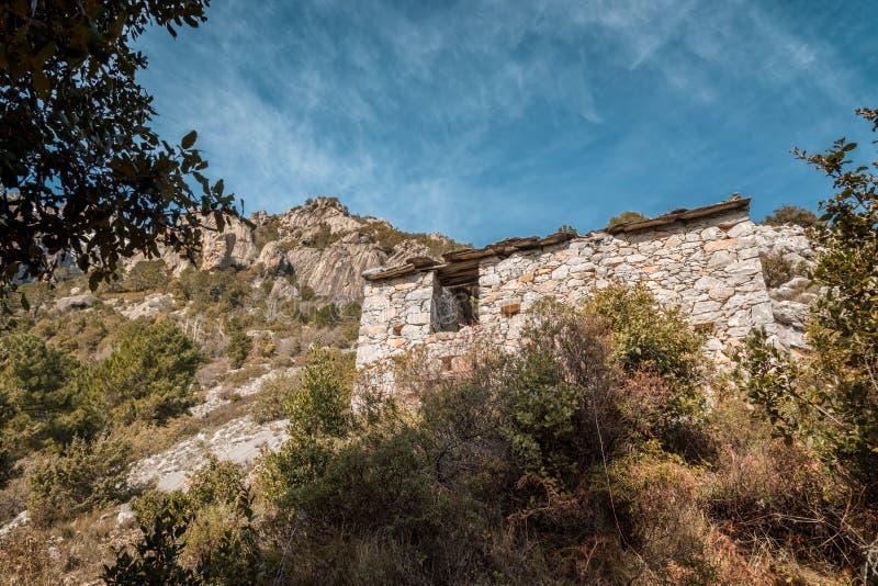 遗弃石buiding在Venaco附近的山在可西嘉岛 免版税库存图片