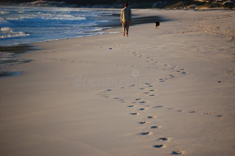 遛他的沿海滩的狗在海洋附近的一个人,留下他的脚印在沙子 库存图片