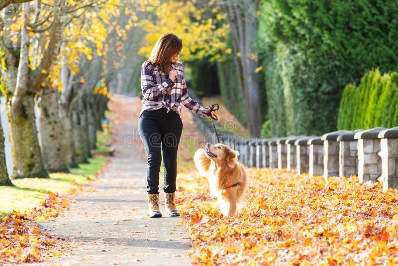 遛在秋天叶子的妇女金毛猎犬狗 免版税库存图片