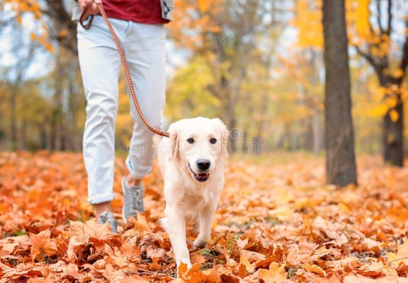 遛年轻的人他的狗 图库摄影