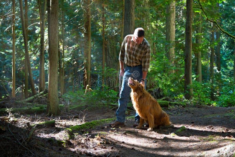 遛狗在森林 免版税库存图片
