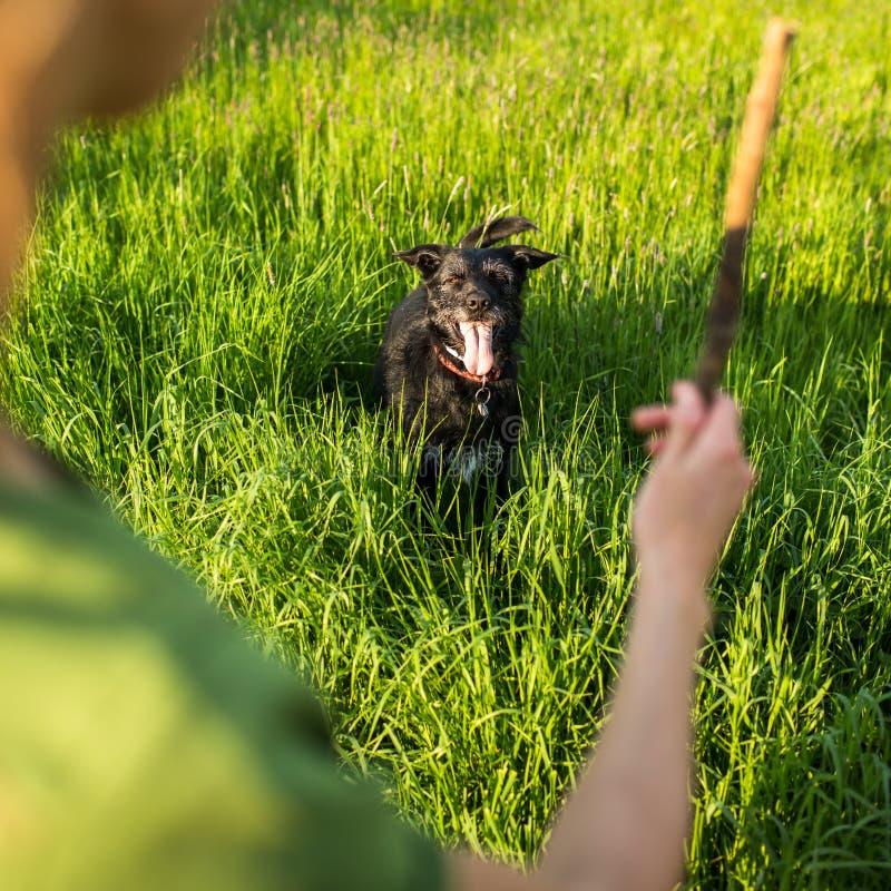 遛狗-投掷棍子对取指令 免版税库存图片