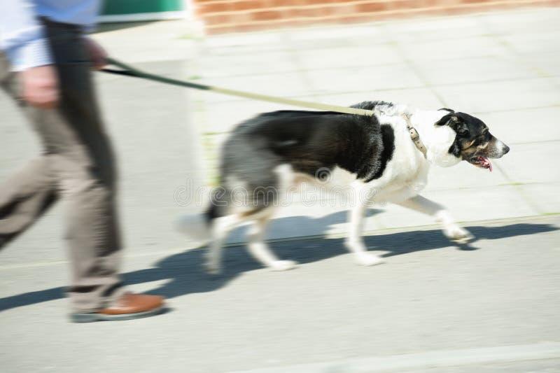遛狗 免版税图库摄影