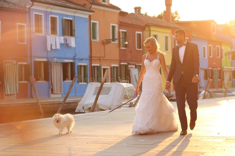 遛的新娘和新郎他们的狗 库存照片