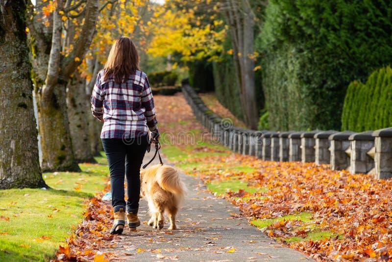遛金毛猎犬狗的妇女 免版税图库摄影