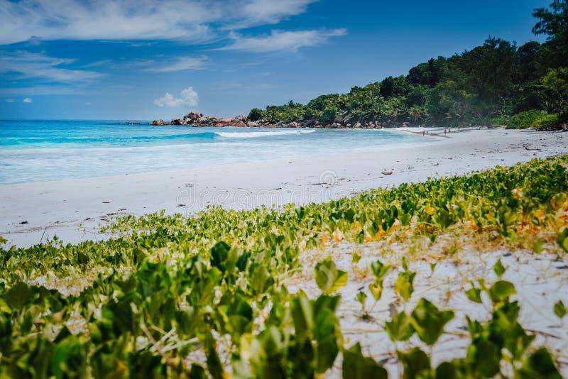 遥远的昂斯市椰树海滩,拉迪格岛,塞舌尔低角度射击  原始蓝色透明的水,棕榈树和 库存图片