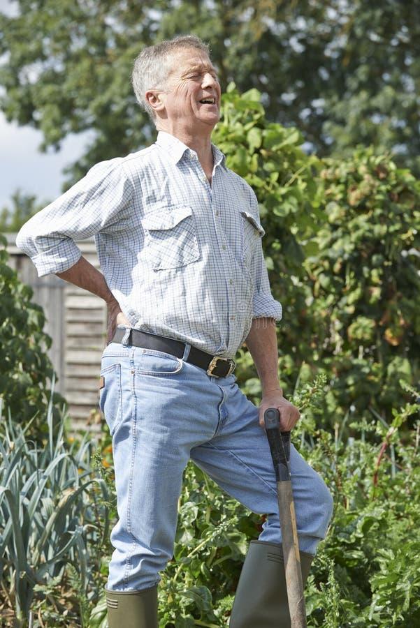遭受背部疼痛的老人,从事园艺 库存照片