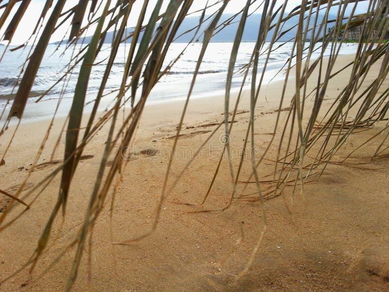 遭难的沙滩棕榈 免版税库存图片