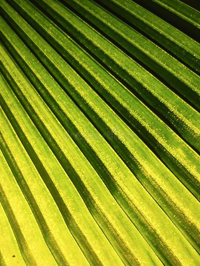 遮蔽叶子棕榈的光线影响 免版税库存图片