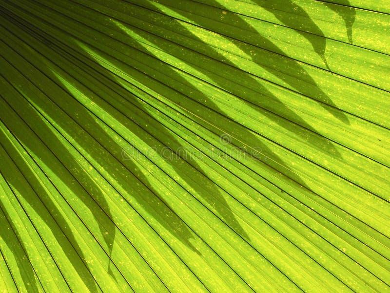 遮蔽叶子棕榈的光线影响 库存照片