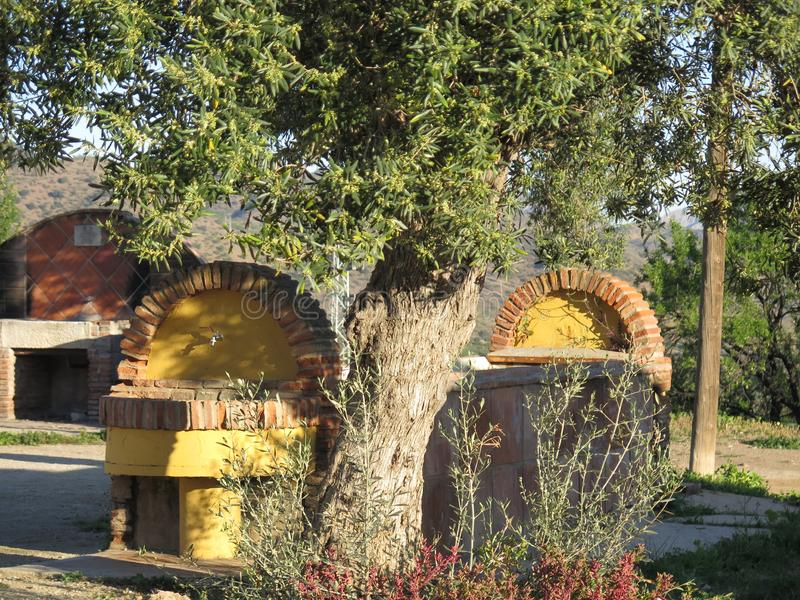 遮蔽牛低谷和barbeue的橄榄树 免版税库存照片