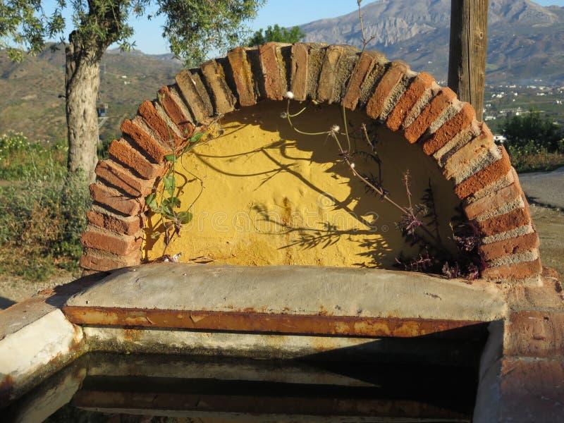 遮蔽牛低谷的橄榄树 免版税图库摄影