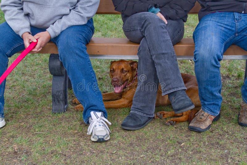 避难在公园长椅下的热狗 库存图片