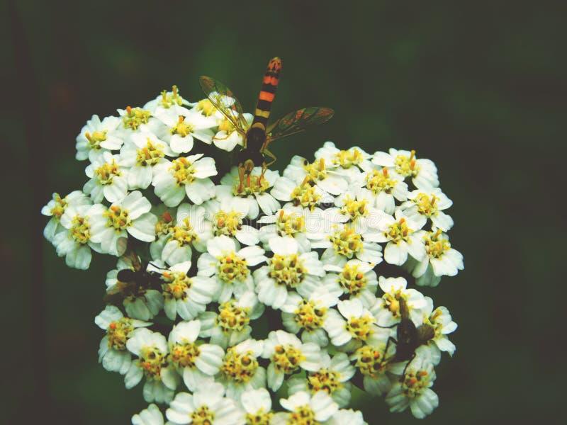 那个黄蜂喜欢  免版税库存图片