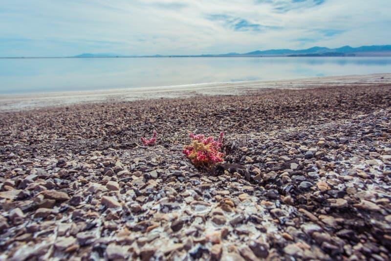 邦纳维尔盐沼,图埃勒县,犹他,美国 库存照片