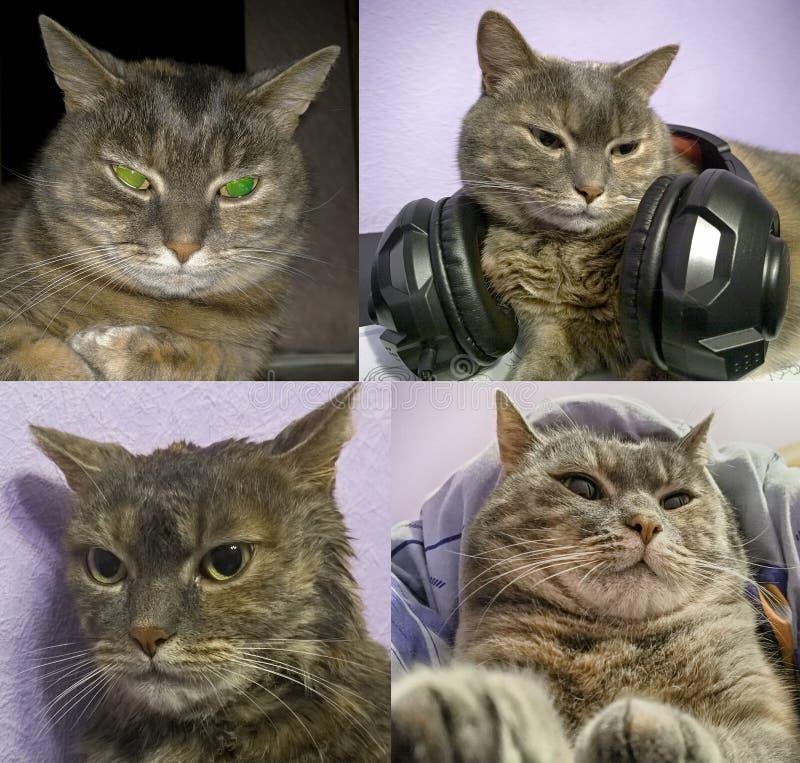 邪恶的灰色猫 库存照片