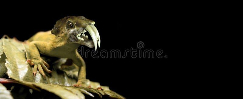 邪恶的蜥蜴 库存图片