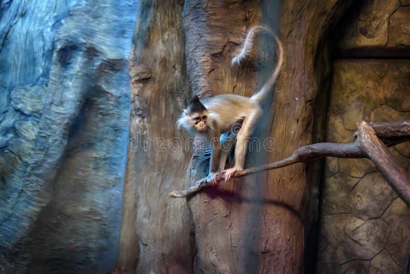 邪恶的猴子画象 免版税库存图片