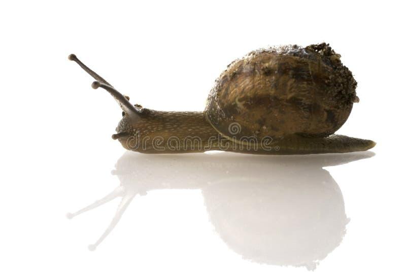 邮件蜗牛 免版税库存照片