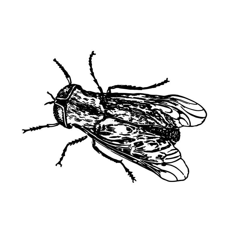 邮票昆虫飞行 库存图片