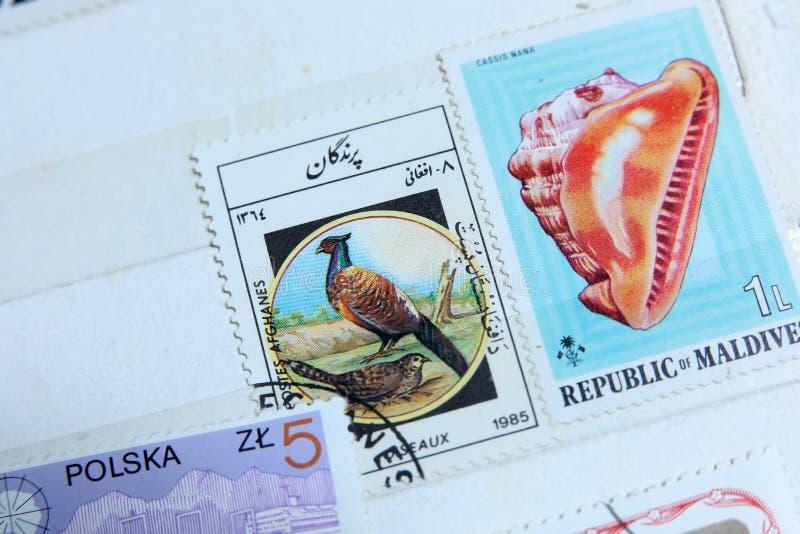 邮票,马尔代夫贝壳 免版税库存图片