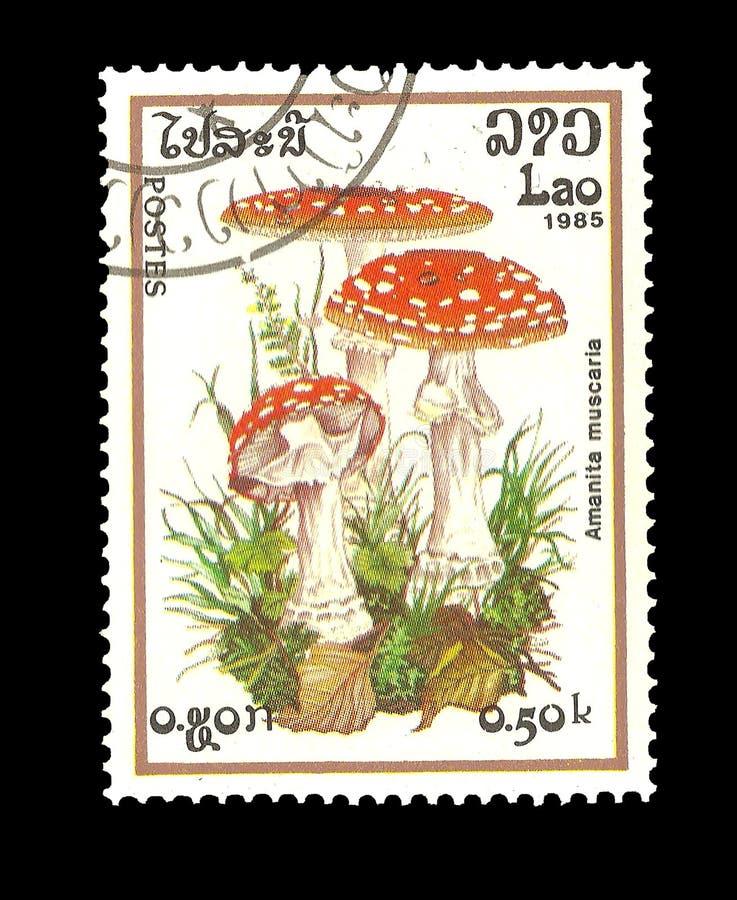 邮票:老挝1985年,伞形毒蕈MUSCARIA 免版税库存图片